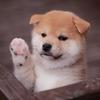 """今""""愛犬には手作りごはん""""が熱い?!"""
