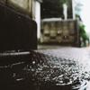 雨の中のスナップ。
