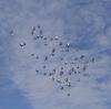 鳩の運動不足解消