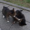 11月後半の #ねこ #cat #猫 その1