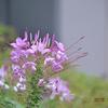 今日も花に逢いたくて🌸 (Photo 多)