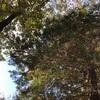 【茨城県のソロキャンプ】ゴールデンウィークに行く穴場のキャンプ場はあるの?
