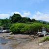 鹿児島・宮崎の照葉樹林で亜熱帯を感じる