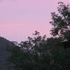 東雲色に染まる乗鞍高原の朝とジョウビタキ