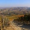 バローロのワイン畑