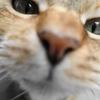 5月後半の #ねこ #cat #猫 どらやきちゃんA