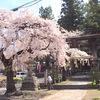 【後編】長野の春を感じたくて、移動距離1000kmかけた桜めぐりの全記録をご覧ください。【桜で見る信州】
