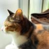【愛猫日記】毎日アンヌさん#239
