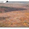 紅葉の那須高原へ
