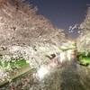 夜桜お花見してきた🌸