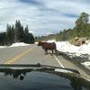 カナダの田舎暮らしならでは?な出来事。