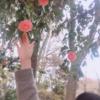 ✶ 女性は花