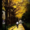 December's yellow-stained road