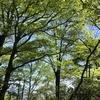 新緑の丹沢ロングハイキング(宮ケ瀬~丹沢山~塔ノ岳~大倉)