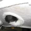 2008年11月4日 くまちゃんのお腹はいい匂い