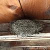 ツバメの巣が壊されてその後どうなったか?