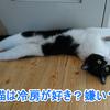 猫は冷房が嫌い?好き?快適な温度は何度?