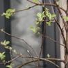 また芽が増えました(^o^)