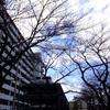 2017年3月3日(金)強風ひな祭り