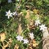 移住生活 2021年自然観察記録 庭の花(3/24)
