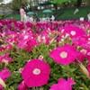 富士森公園 八王子緑化フェア