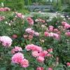 軽井沢レイクガーデン「自然を愛するすべての人へ~秋の軽井沢で、紅葉&ローズを同時に楽しもう」。オータムシーズンは10月14日(土)~11月5日(日)、秋のマルシェは9月18日(月・祝)、10月8日(日)に実施