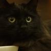 フォトログ × 猫ログ:PENTAX K-5ⅱにオールドレンズを付けて黒猫の王子くんを撮影してみた