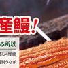 量販店夏の土用丑鰻予約パンフ⑦マミーマート(2017/6/23)