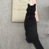 乳母役黒猫りぃちゃんは 雪ちゃんロスに。
