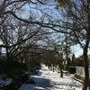 1/15 凍てつく日。