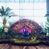 シンガポール旅① 【世界1位になったハブ空港!!】シンガポール航空でチャンギ国際空港へ