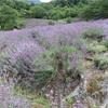 70000株のラベンダーの花畑!池田町「夢農場 ラベンダー畑」
