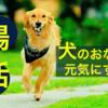 犬の腸活、善玉菌を味方につけて犬を元気にする秘訣