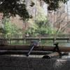 3月下旬:都立井の頭恩賜公園をお写んぽ。その4 弁財天・椿・石碑編