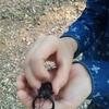 まだ森にはノコギリクワガタやカブトムシがいました!