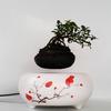 Kickstarter発日本の空中盆栽アイデアをさっそくベトナム人も輸入