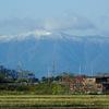 雪山・モミジ・ネコ 〜今週の荒神山〜