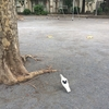幸せのハート鳩