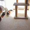 我が家の猫おもちゃ紹介-後編