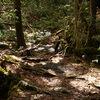 【不思議な体験】森の中に現れる謎の暗黒空間