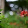 ✿早秋の上野公園❀