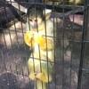 【川崎】ペットと行ける動物園!!夢見ヶ崎動物公園で動物と古墳と木のトンネル♡