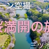 4K ドローン空撮『桜満開』DJI Japan cherry blossom 三ツ池公園