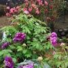 庭でお花見
