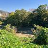 内池(和歌山県和歌山)