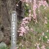 2019福島県の三春滝桜から日帰り桜ドライブ~地蔵桜・不動桜・雪村桜・合戦場の桜に、この春2度目の花見山へ