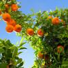4月14日、オレンジデーとは?第3の愛の記念日って、ロマンチックですね。