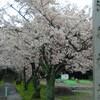 愛知県刈谷市の洲原神社に参拝そして洲原公園で花見