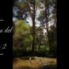 松の森2 別駐車場 La Boca Del Asno (ラ ボカ デル アスノ) ― スペイン素敵な山歩き。Madridから日帰り編