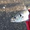 堤防からキャスティングする魚群探知機「LUCKYLAKER」で佐田岬のアジ狙い / 楽になるどころか釣りの大変さを実感するはめに